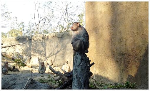 201503tokiwa_zoo08.jpg