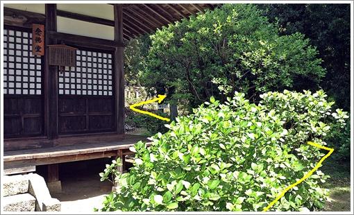 201504ohirayama_amidaji11.jpg