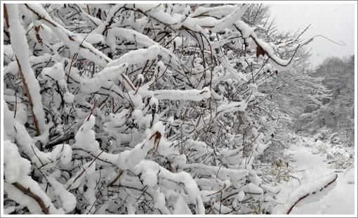 2015togusagamine_winter07.jpg