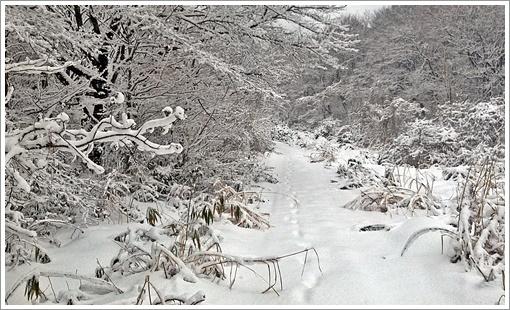 2015togusagamine_winter08.jpg