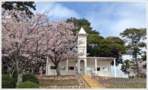 2015tokiwa_sakura03.jpg