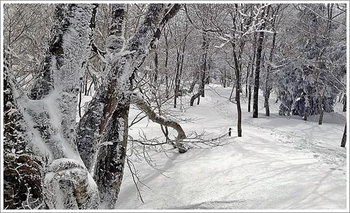 hibasan_winter22.jpg