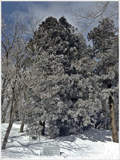 hibasan_winter26.jpg