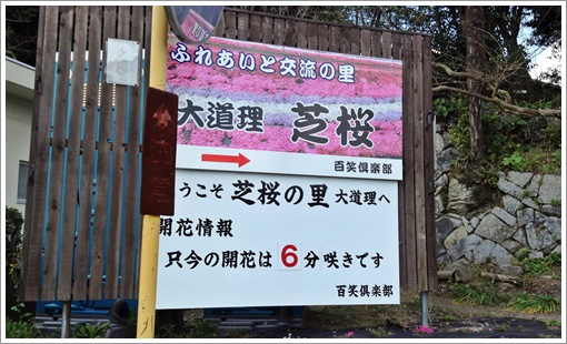 odori_sibazakura01.jpg