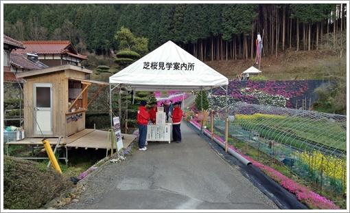 odori_sibazakura02.jpg