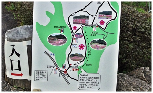 odori_sibazakura03.jpg