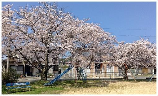 ogorizakura_05.jpg