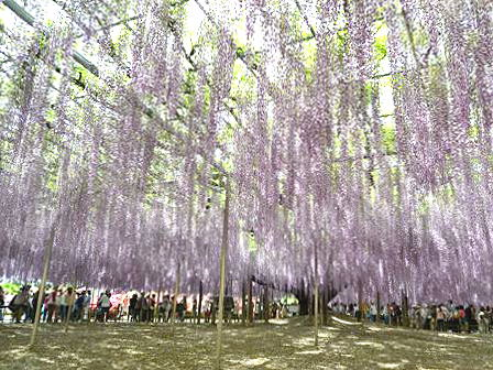 ashikaga_2015May006.jpg