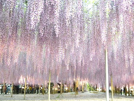 ashikaga_2015May021.jpg