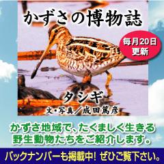 かずさタイトル2015-01