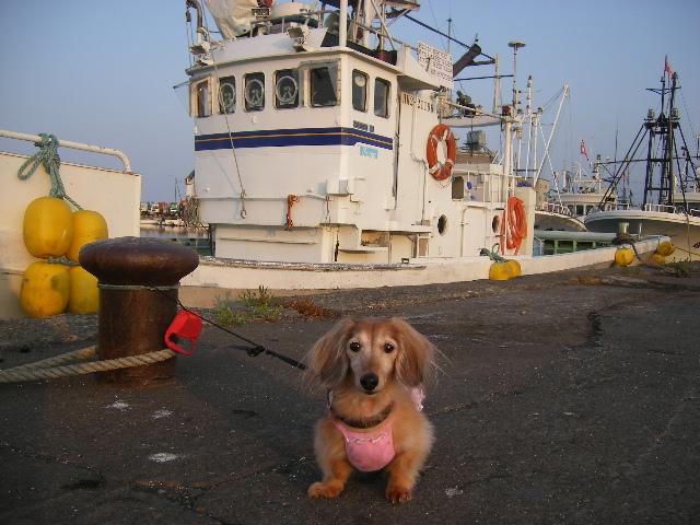 2011,7実家3