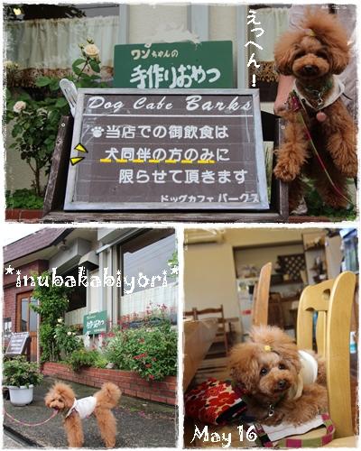 kishiwada1.jpg