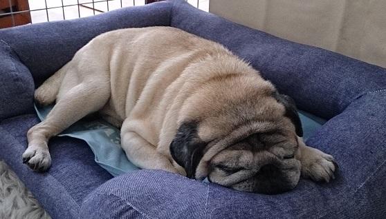 ベッドも冷え冷えマット仕込みに