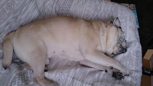ソファーの上、マジ寝