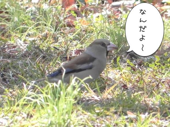 野鳥にジェラシー1