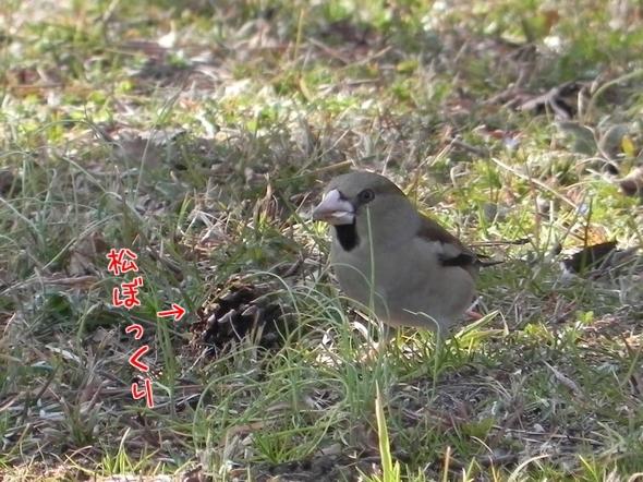 野鳥にジェラシー2