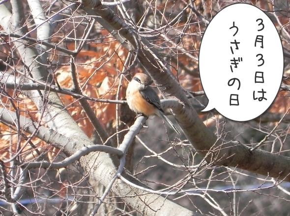 野鳥にジェラシー4