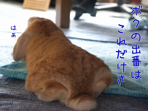 菖蒲まつり1