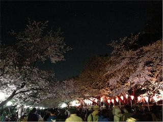 上野で夜桜