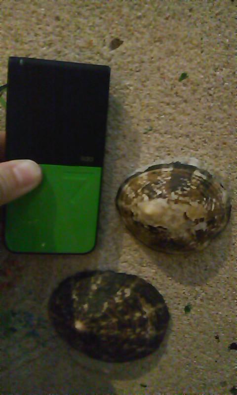壁のインテリアのべべ貝が巨大でびっくり