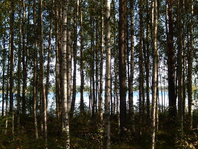 木立の向こうの湖