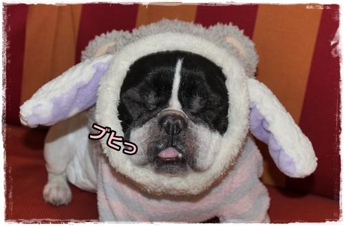 IMG_7684ひつじ