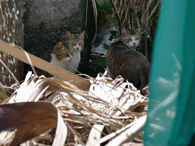 護岸ブロックと猫