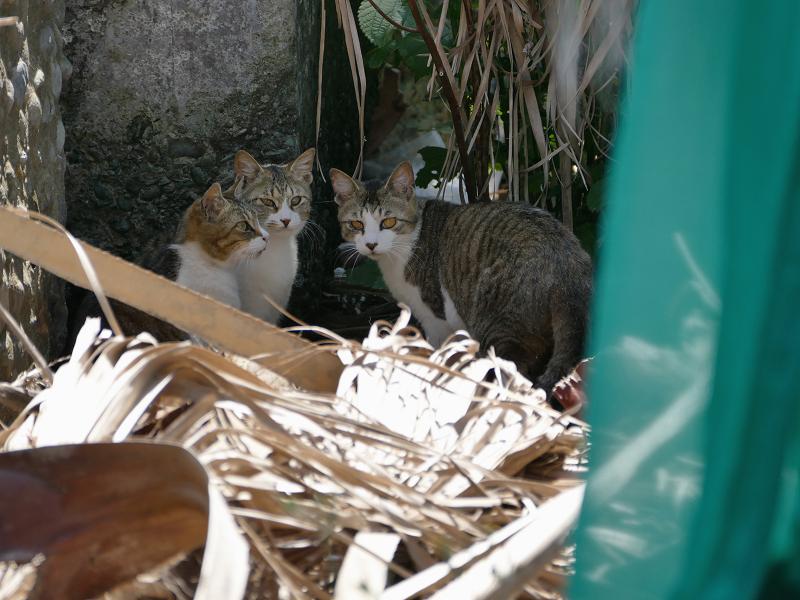 護岸ブロックの猫