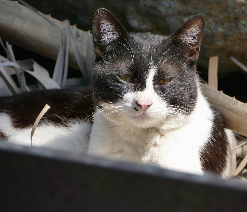 陽射しがタップリの鉢割れ猫