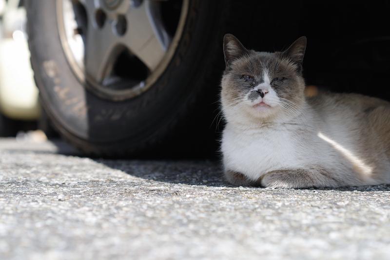 車の下の洋猫風猫