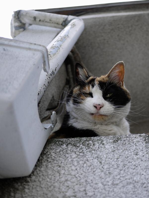 高い所から見ている猫