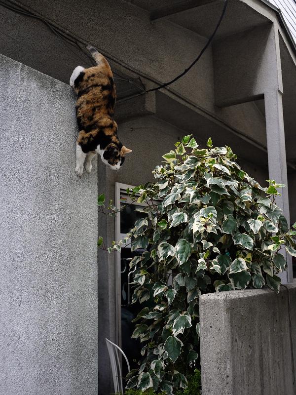 高い所から飛び降りる猫