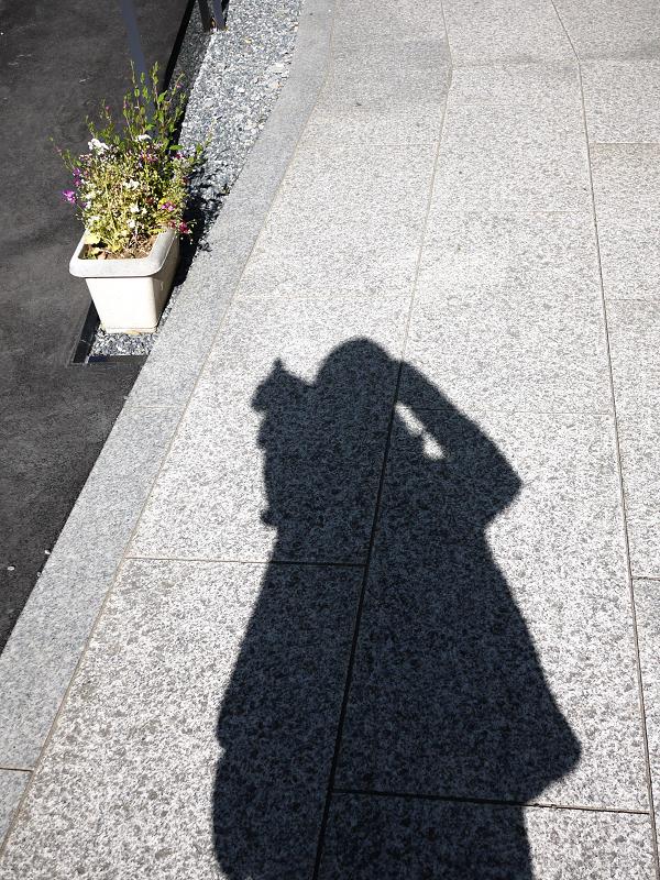 猫を乗せた影