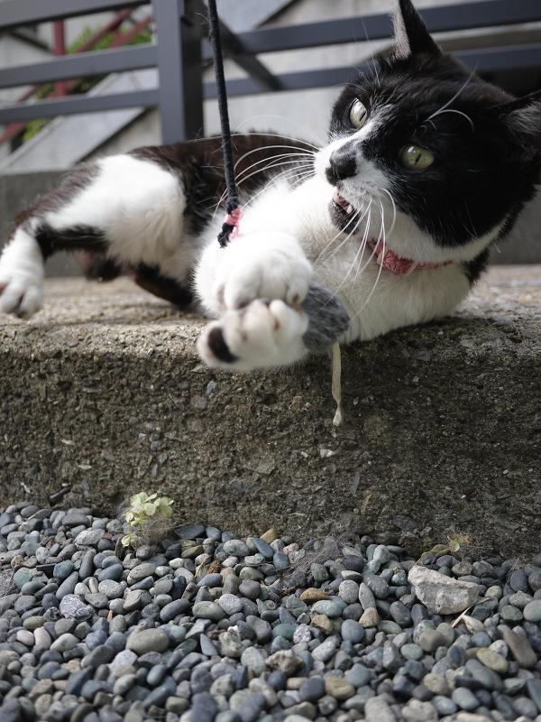 ネズミに夢中の黒猫2