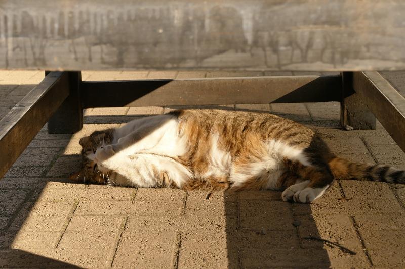 ベンチの下で遊んでる猫1
