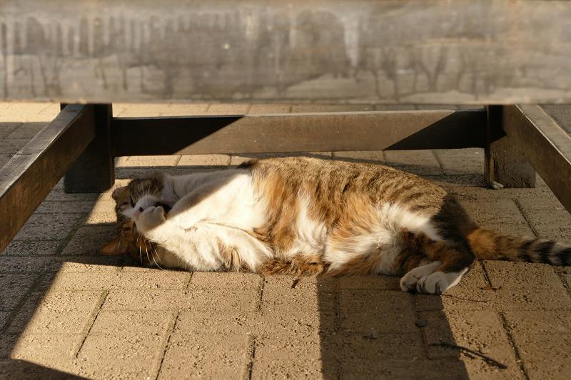 ベンチの下で遊んでる猫2