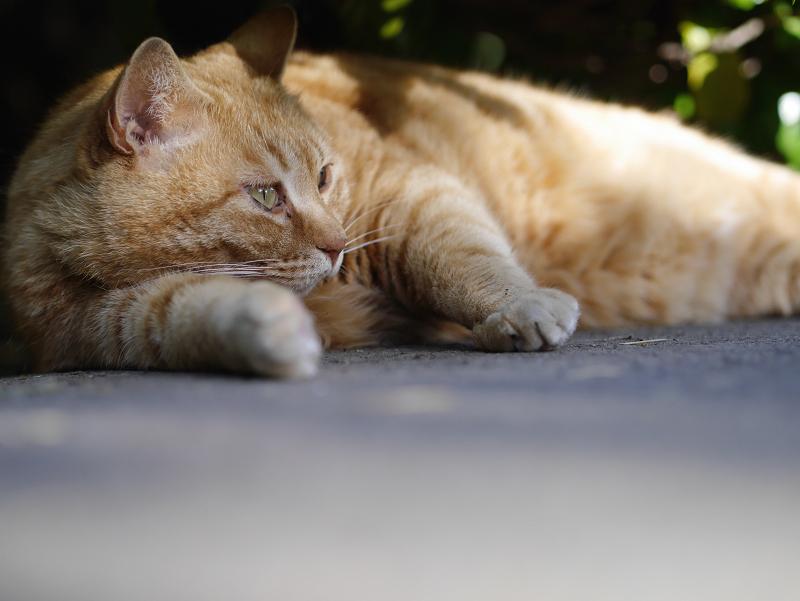 茂みの下のデカイ猫