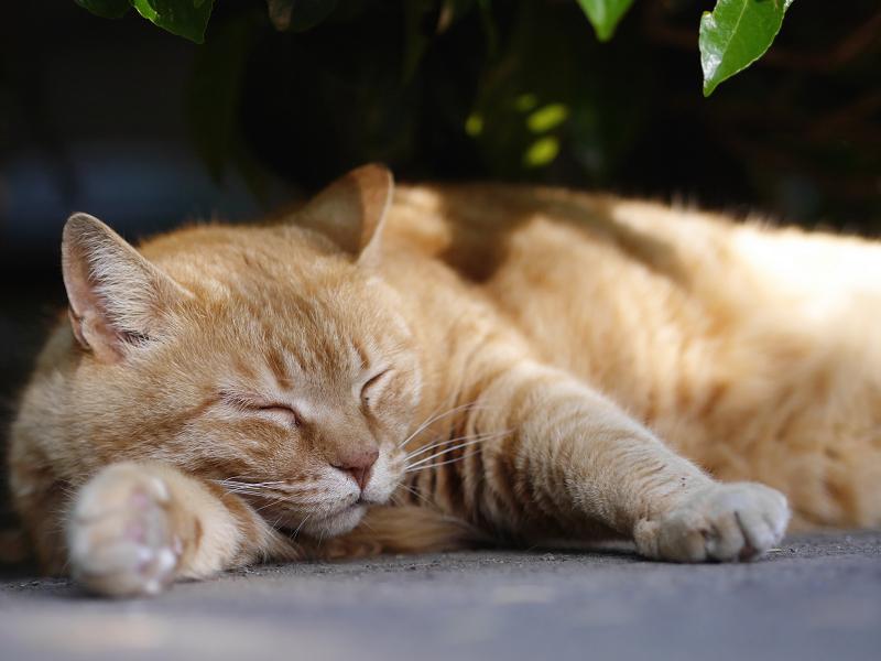 茂みの下の大きい猫