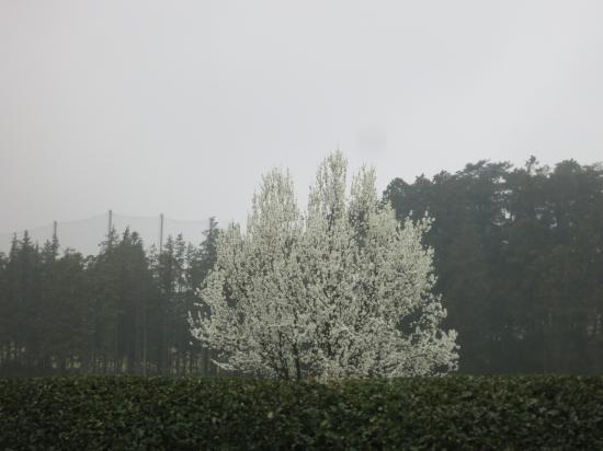 2015.4.7埼玉