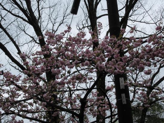 2015.4.13大阪・京都2