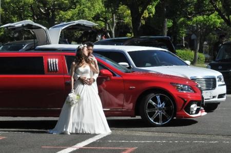 rewhite-limousin