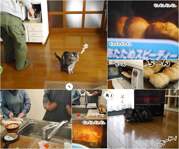 cats_201501301656048ac.jpg