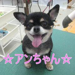 IMG_1577_2015060120060964d.jpg