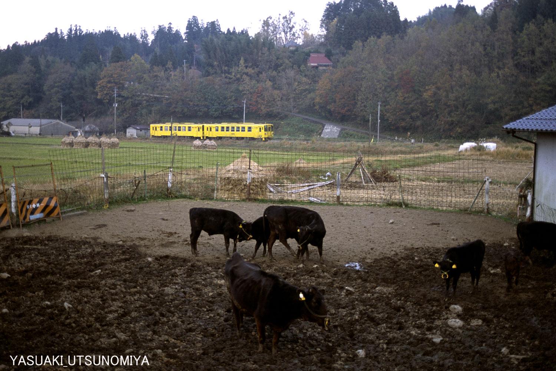 キハ125.と牛