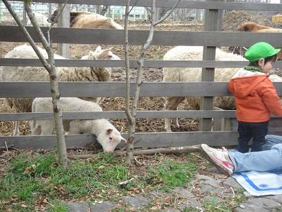 BOCCA子羊
