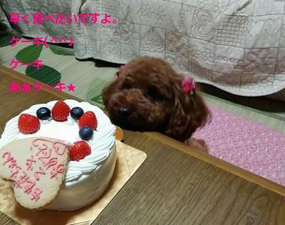 ケーキに釘つけ