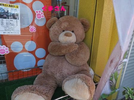 ハバナデーさんの熊さん
