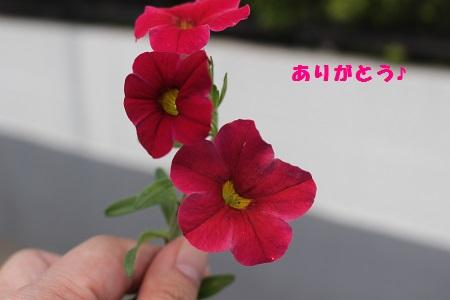 お花 ありがとう