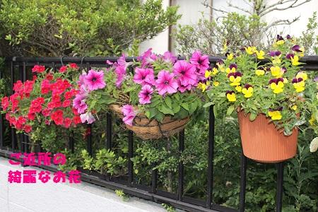 ご近所の綺麗なお花
