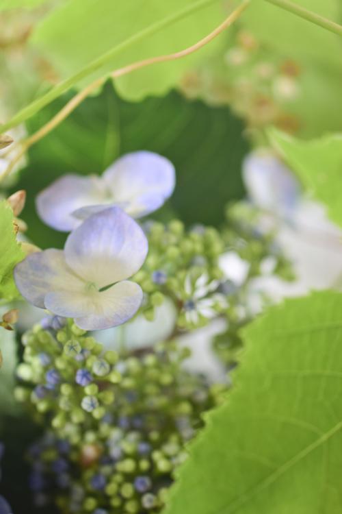 flower_15_6_9_5.jpg
